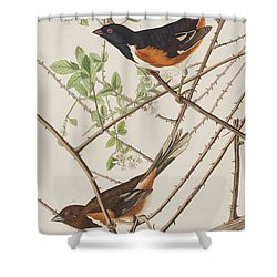 Towhe Bunting Shower Curtain
