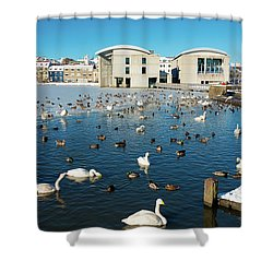 Town Hall And Swans In Reykjavik Iceland Shower Curtain by Matthias Hauser