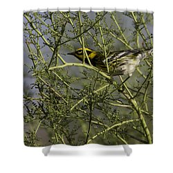 Shower Curtain featuring the photograph Townsend's Warbler by Anne Rodkin