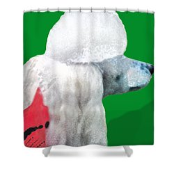 Toy Poodle Louie In His Red Sweater Shower Curtain