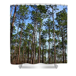 Trail Through The Pine Forest Shower Curtain