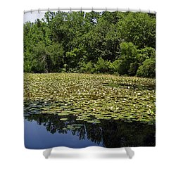 Tranquility Shower Curtain by Flavia Westerwelle