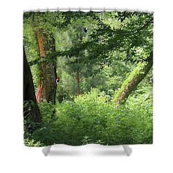 Tranquility Shower Curtain by Roena King