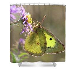 Translucent Shower Curtain