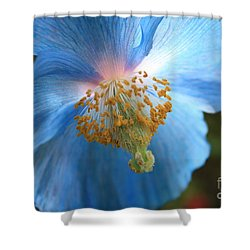 Translucent Blue Poppy Shower Curtain by Carol Groenen