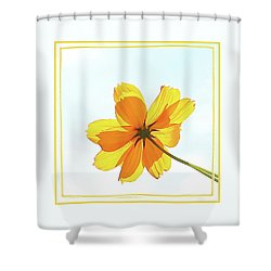 Translucent Flower Shower Curtain by Ellen O'Reilly