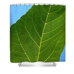 Transparence 18 Shower Curtain by Jean Bernard Roussilhe