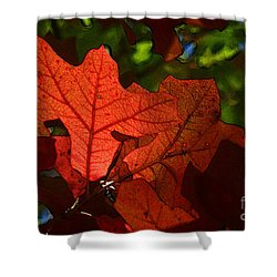 Transparence 22 Shower Curtain