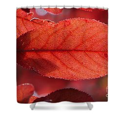 Transparence 23 Shower Curtain by Jean Bernard Roussilhe