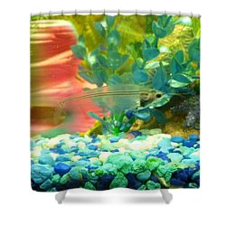 Transparent Catfish Shower Curtain by Barbara Yearty