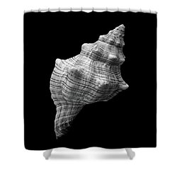 Trapezium Horse Conch Sea Shell Shower Curtain