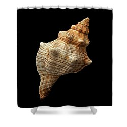 Shower Curtain featuring the photograph Trapezium Horse Conch Shell by Jim Hughes