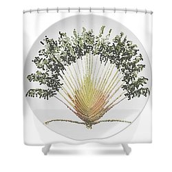 Shower Curtain featuring the digital art Travelers Palm Plate by R  Allen Swezey