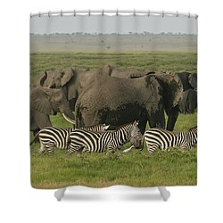 Shower Curtain featuring the photograph Travelling Companions by Gary Hall