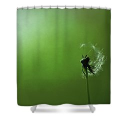 Tread Softly Shower Curtain by Rebecca Sherman