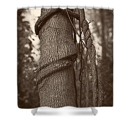 Tree 5 Shower Curtain by Simone Ochrym