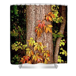 Tree Adornment Shower Curtain