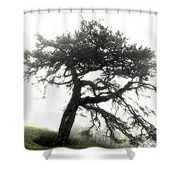 Shower Curtain featuring the photograph Tree by Alex Grichenko