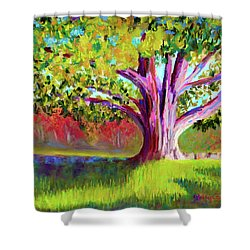 Tree At Hill-stead Museum Shower Curtain by Polly Castor