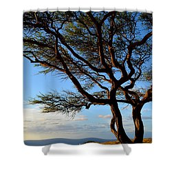 Tree At Lapakahi State Historical Park Shower Curtain