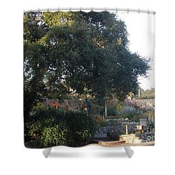Tree At Mission Carmel Shower Curtain