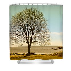 Shower Curtain featuring the photograph Tree At New Castle Common by Nancy De Flon