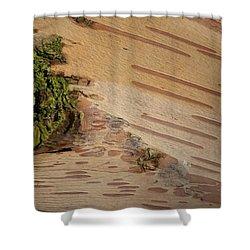 Tree Bark With Lichen Shower Curtain by Margaret Brooks