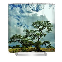 Tree Beside The Tracks Shower Curtain
