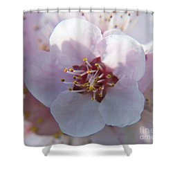 Shower Curtain featuring the photograph Tree Blossoms by Elvira Ladocki