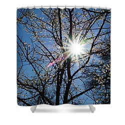 Tree Buds Shower Curtain