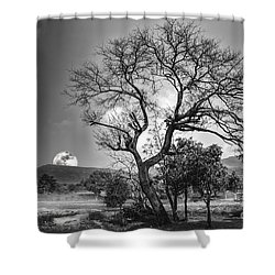Tree Shower Curtain by Charuhas Images