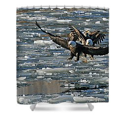 Tree Eagles On Ice Shower Curtain