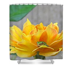Tree Frog Series 3 Shower Curtain
