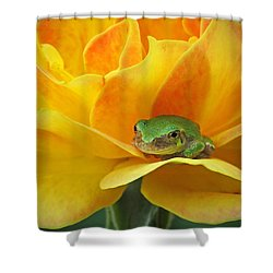 Tree Frog Series 4 Shower Curtain