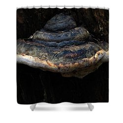 Shower Curtain featuring the photograph Tree Fungus by Tikvah's Hope