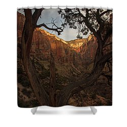 Tree Heart Shower Curtain