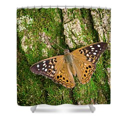 Shower Curtain featuring the photograph Tree Hugger by Bill Pevlor