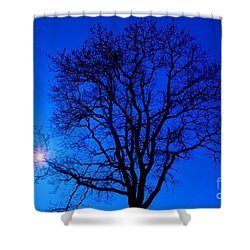 Tree In Blue Sky Shower Curtain by Silvia Ganora