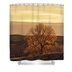 Tree In Desert At Sunset Shower Curtain