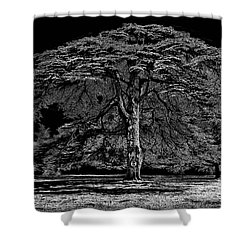 Tree In England Shower Curtain