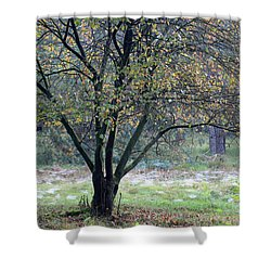 Tree In Forest With Autumn Colors Shower Curtain