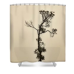 Tree In The Mist Shower Curtain
