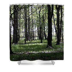 Shower Curtain featuring the photograph Tree In The Woods by Michelle Audas