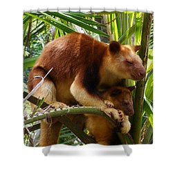 Tree Kangaroo 1 Shower Curtain by Gary Crockett