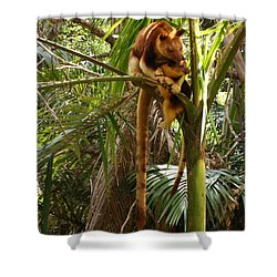 Tree Kangaroo 2 Shower Curtain by Gary Crockett