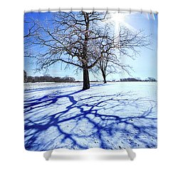 Shower Curtain featuring the photograph Tree Light by Phil Koch