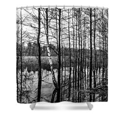 Shower Curtain featuring the photograph Tree Lines by Dmytro Korol