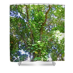 Shower Curtain featuring the photograph Tree M1 by Francesca Mackenney