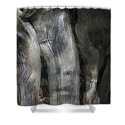 Shower Curtain featuring the photograph Tree Memories # 20 by Ed Hall
