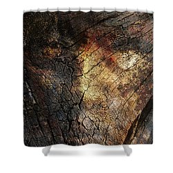 Shower Curtain featuring the photograph Tree Memories # 21 by Ed Hall